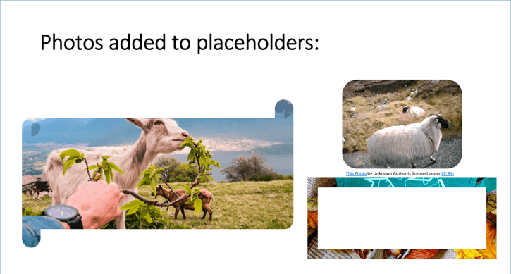 added images to custom layout in ppt